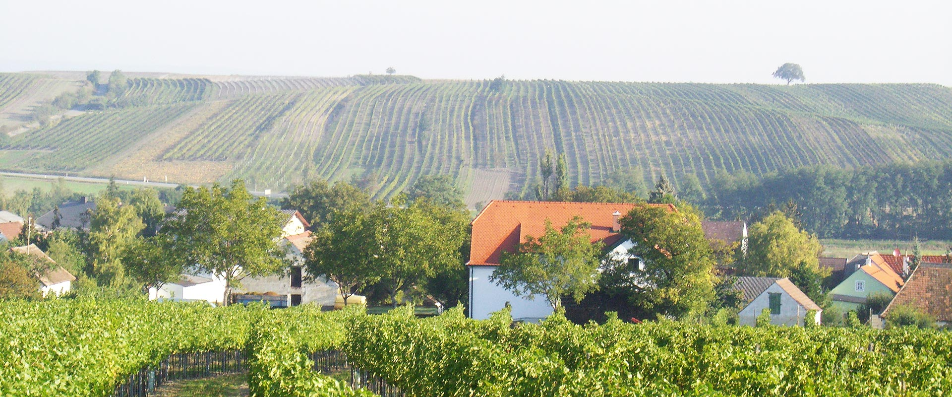 Weinkeller aus der Distanz